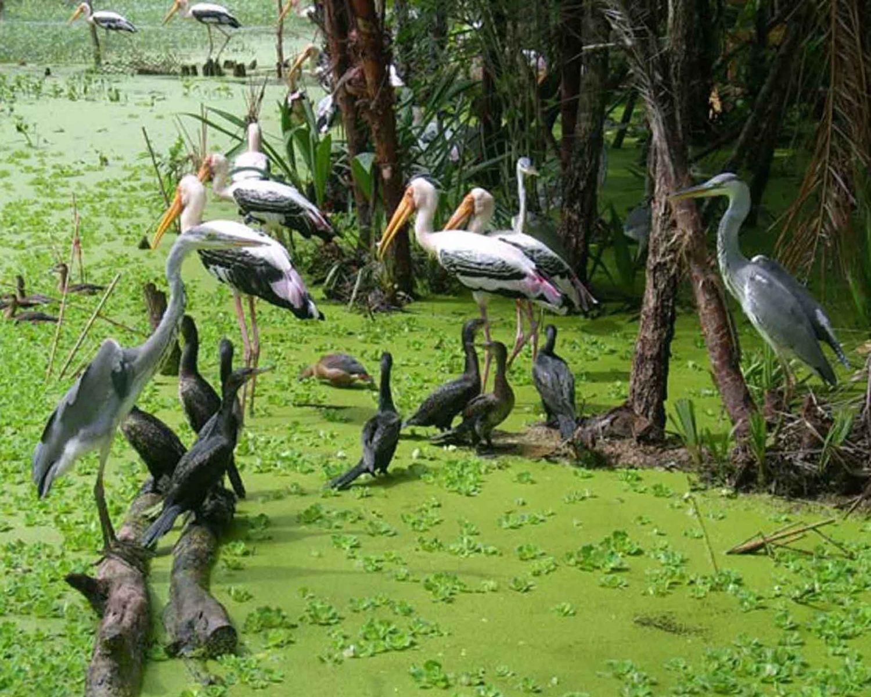 Mekong Bird Watching Tour