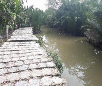 WHAT YOU CAN SEE INMEKONG DELTA? - Mekong Eco - Mekong River Tour - Mekong Eco Tour